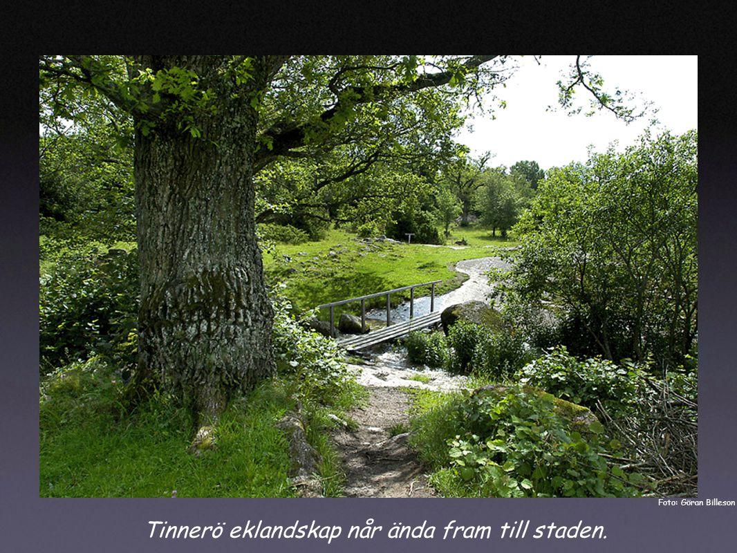 Tinnerö eklandskap når ända fram till staden. Foto: Göran Billeson