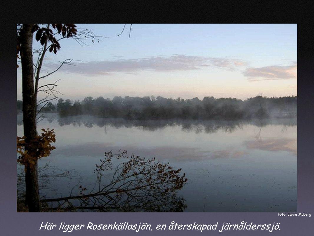 Här ligger Rosenkällasjön, en återskapad järnålderssjö. Foto: Janne Moberg