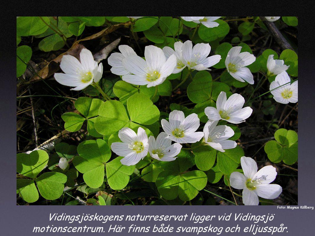 Vidingsjöskogens naturreservat ligger vid Vidingsjö motionscentrum.