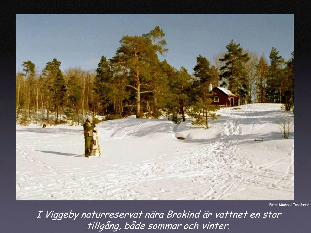 I Viggeby naturreservat nära Brokind är vattnet en stor tillgång, både sommar och vinter.