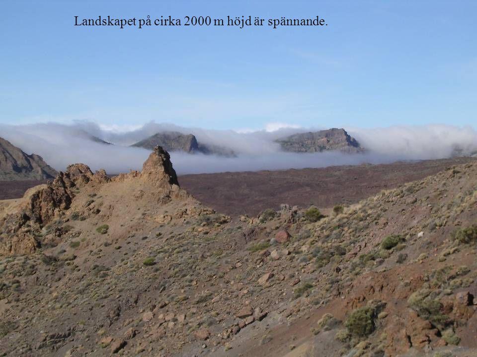 Landskapet på cirka 2000 m höjd är spännande.