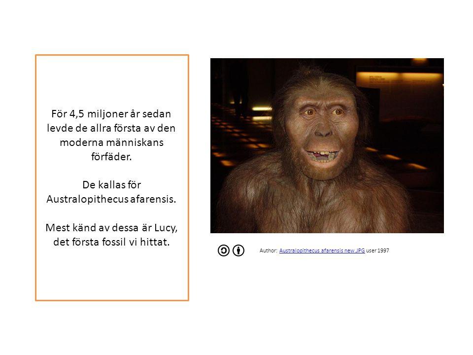 För 4,5 miljoner år sedan levde de allra första av den moderna människans förfäder.