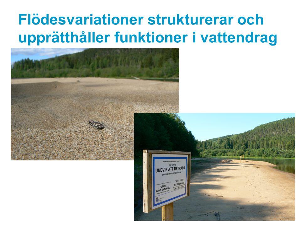 Flödesvariationer strukturerar och upprätthåller funktioner i vattendrag