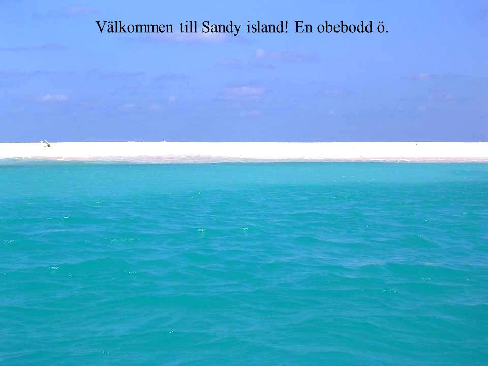 Välkommen till Sandy island! En obebodd ö.