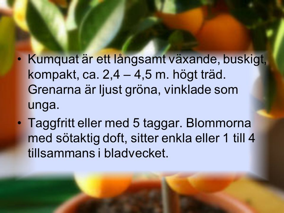 Kumquat är ett långsamt växande, buskigt, kompakt, ca. 2,4 – 4,5 m. högt träd. Grenarna är ljust gröna, vinklade som unga. Taggfritt eller med 5 tagga