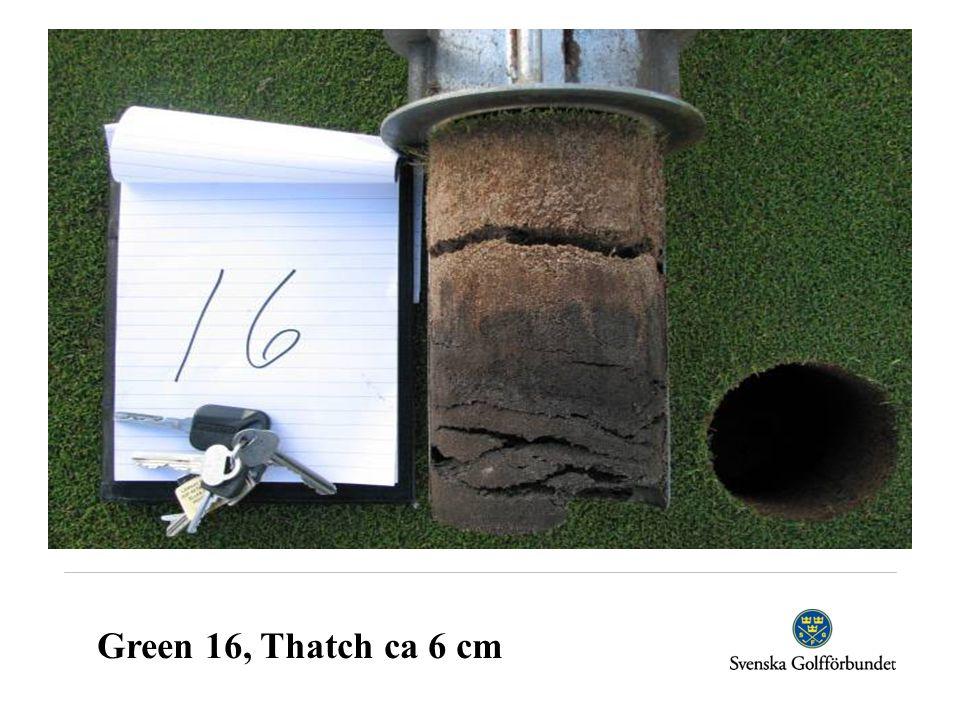 Green 16, Thatch ca 6 cm