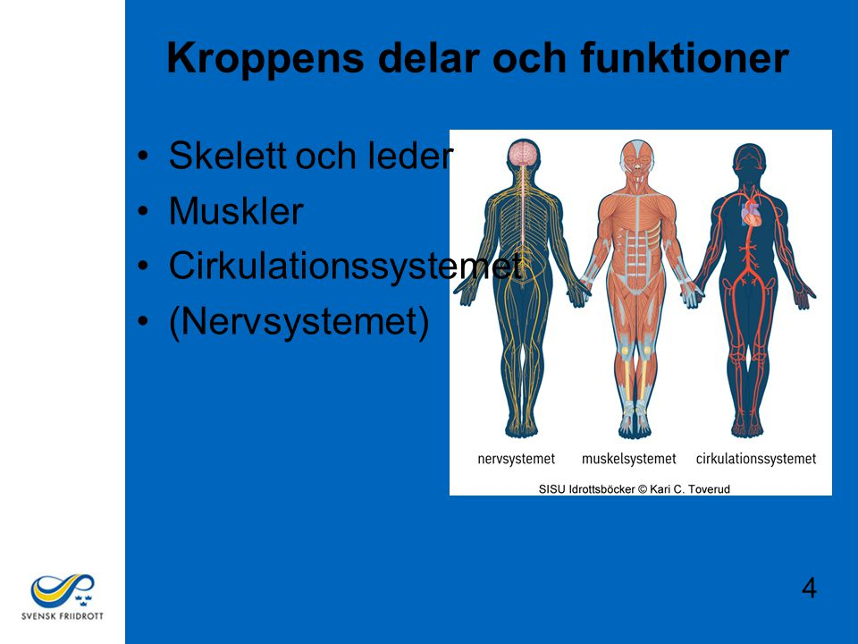 Kroppens delar och funktioner Skelett och leder Muskler Cirkulationssystemet (Nervsystemet) 4