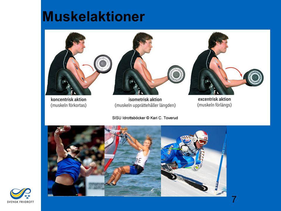 7 Muskelaktioner