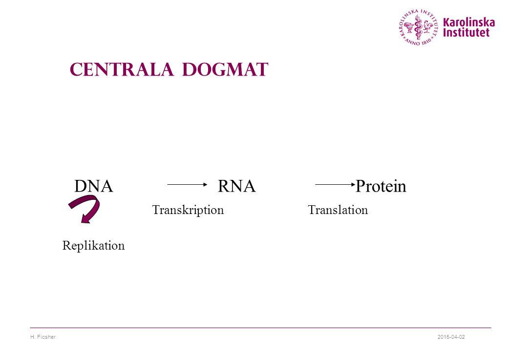 2015-04-02H. Ficsher DNA RNA Protein Replikation TranskriptionTranslation Centrala Dogmat