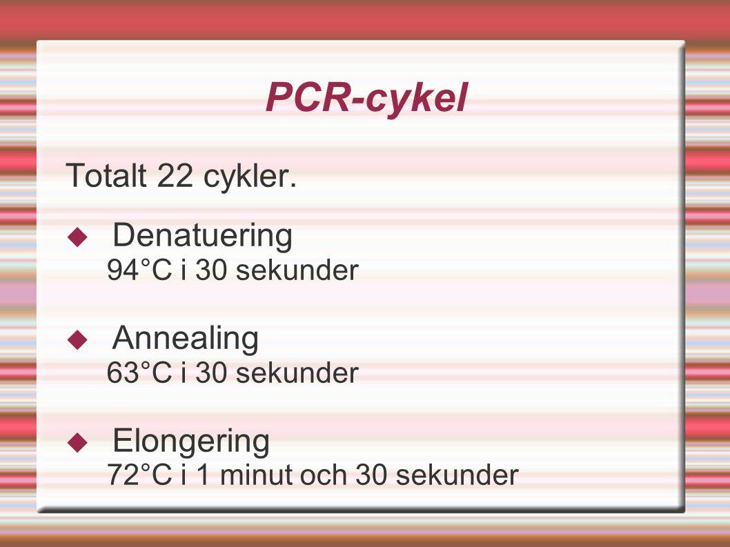 PCR-cykel Totalt 22 cykler.