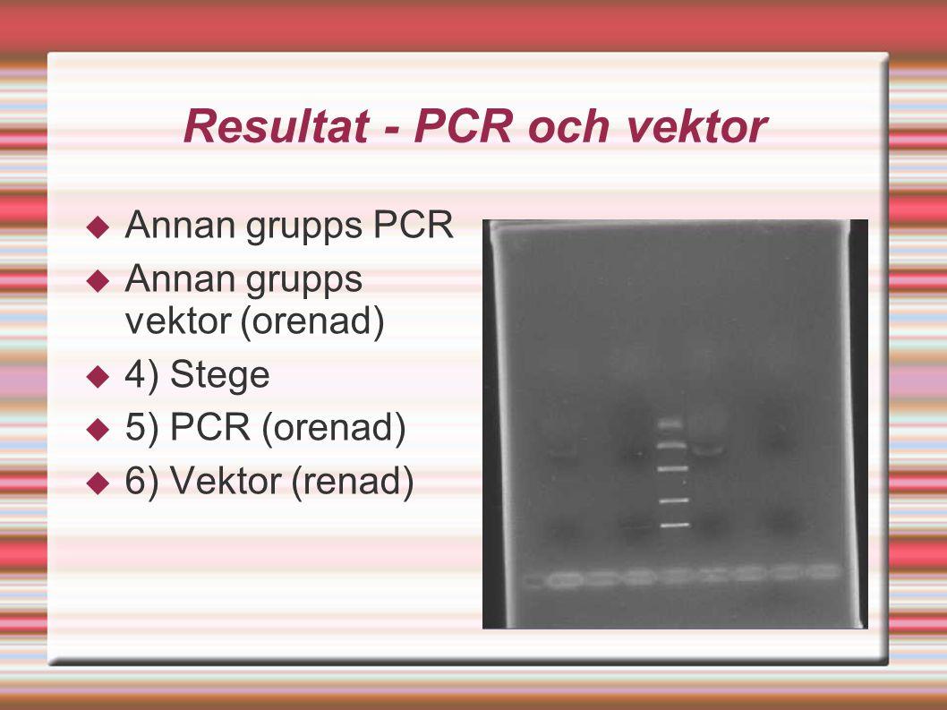 Resultat - PCR och vektor  Annan grupps PCR  Annan grupps vektor (orenad)  4) Stege  5) PCR (orenad)  6) Vektor (renad)