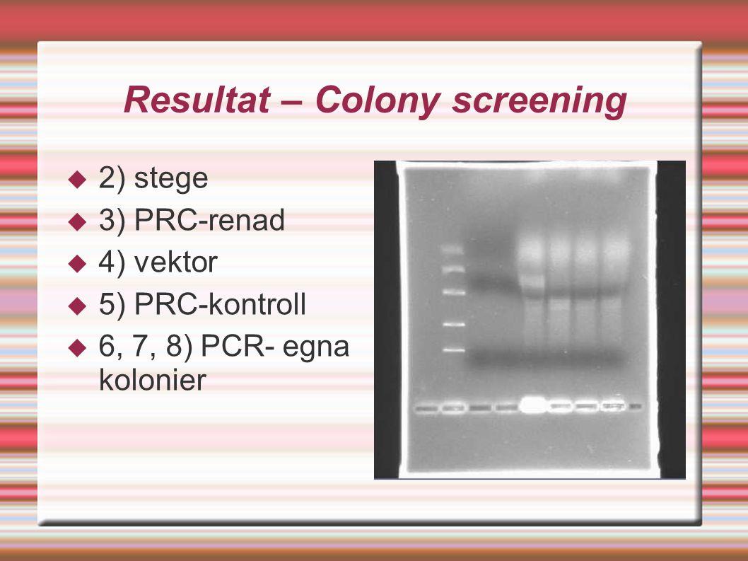 Resultat – Colony screening  2) stege  3) PRC-renad  4) vektor  5) PRC-kontroll  6, 7, 8) PCR- egna kolonier