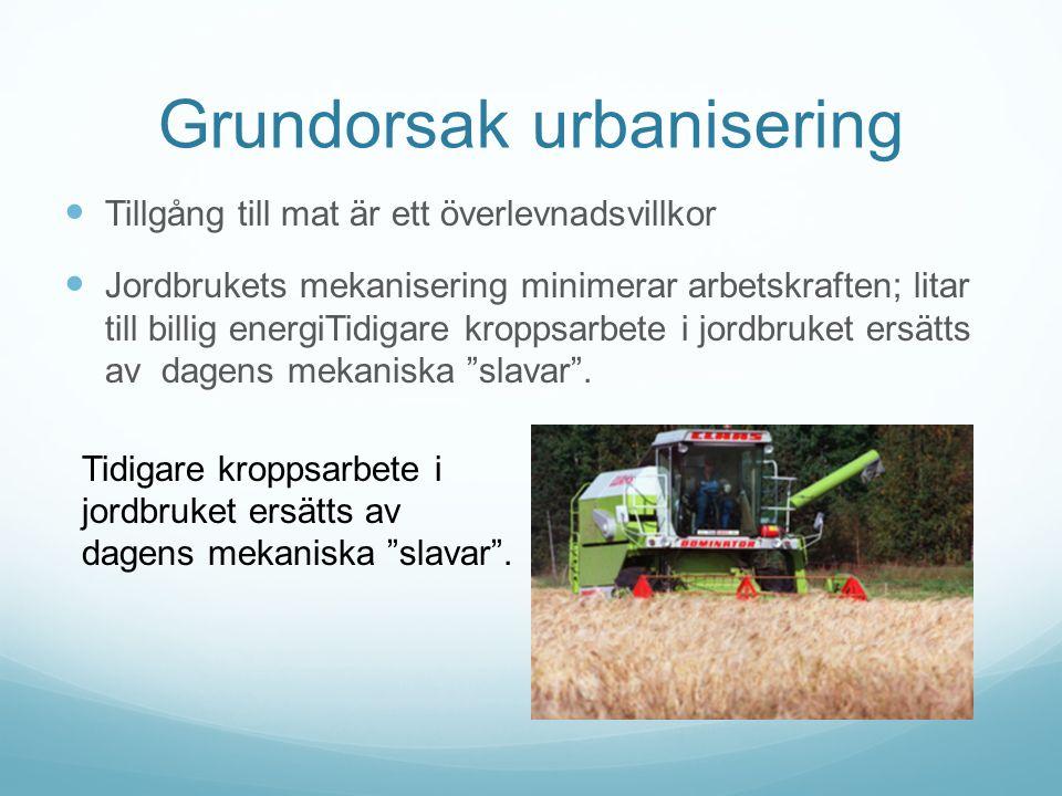 Grundorsak urbanisering Tillgång till mat är ett överlevnadsvillkor Jordbrukets mekanisering minimerar arbetskraften; litar till billig energiTidigare