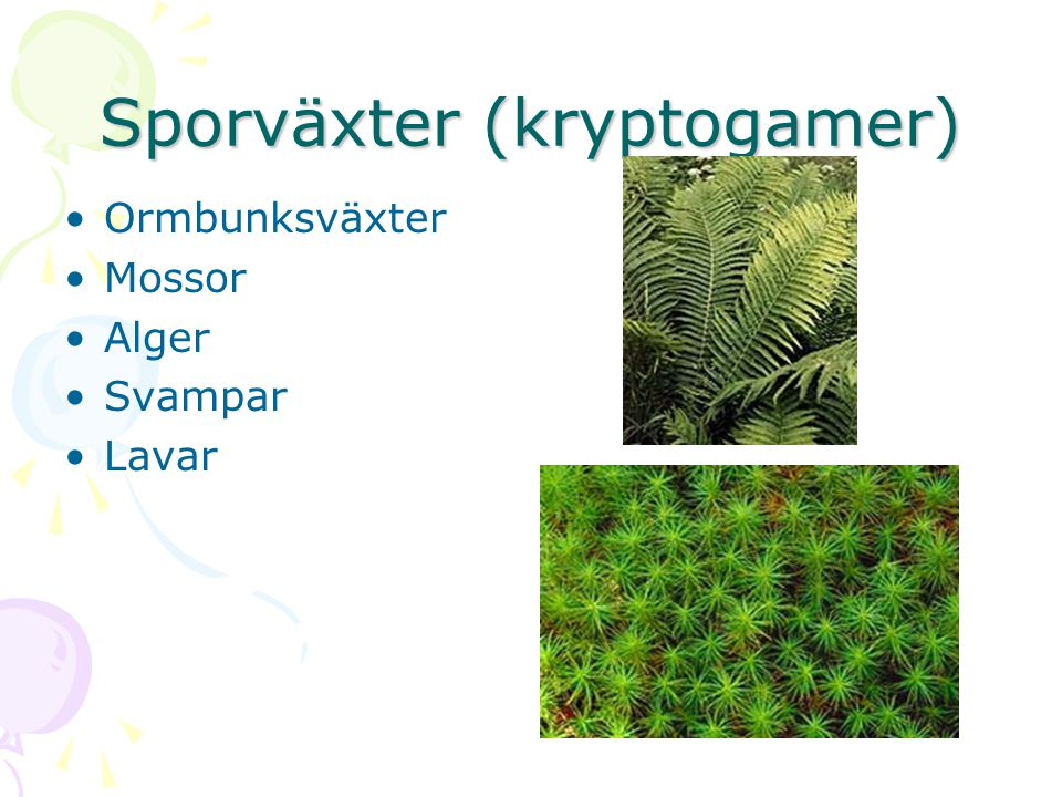 Sporväxter (kryptogamer) Ormbunksväxter Mossor Alger Svampar Lavar