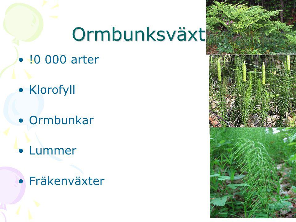 Ormbunksväxter !0 000 arter Klorofyll Ormbunkar Lummer Fräkenväxter