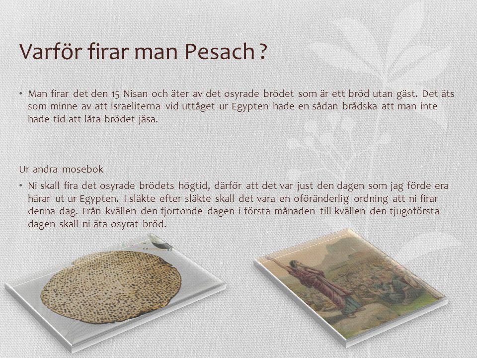 Varför firar man Pesach ? Man firar det den 15 Nisan och äter av det osyrade brödet som är ett bröd utan gäst. Det äts som minne av att israeliterna v
