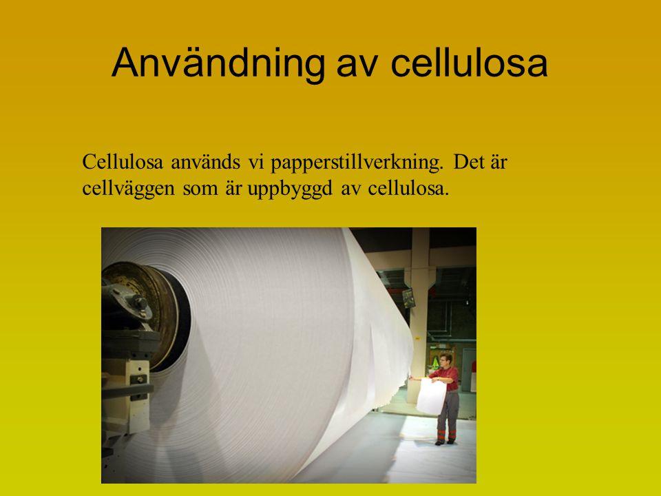 Användning av cellulosa Cellulosa används vi papperstillverkning. Det är cellväggen som är uppbyggd av cellulosa.