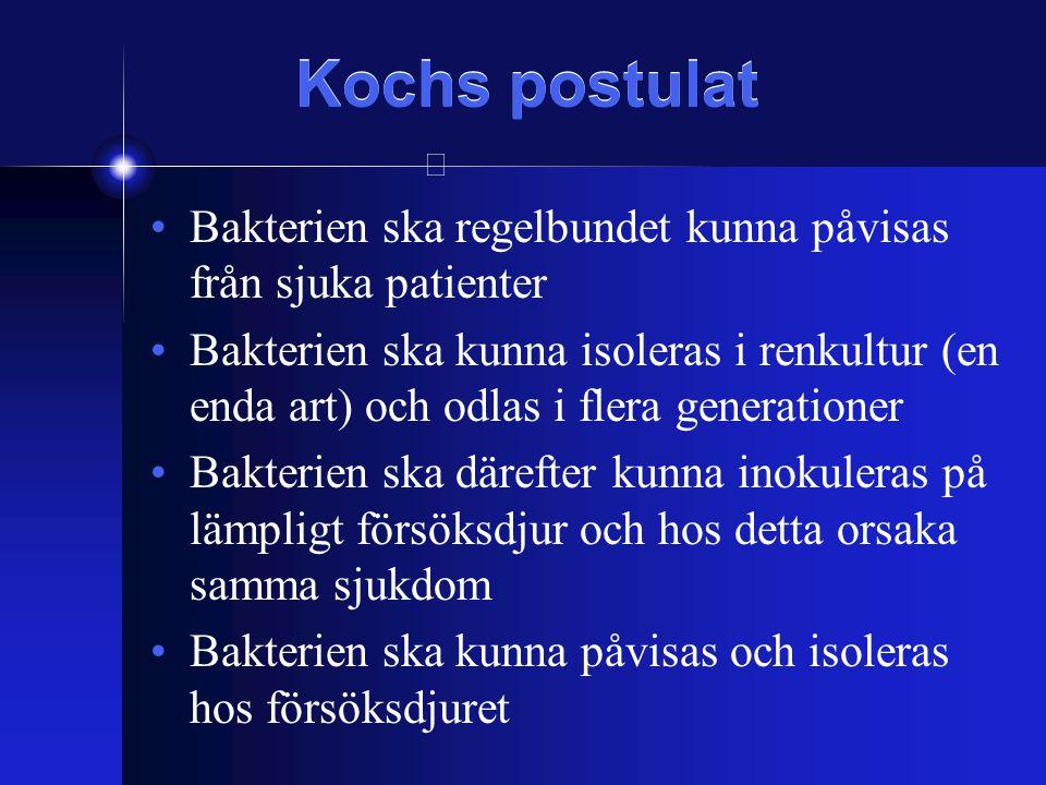 Hela vårt sätt att se på bakterier kan vara en artefakt - Fritt levande (planktoniskt) - Renkulturer (Koch)