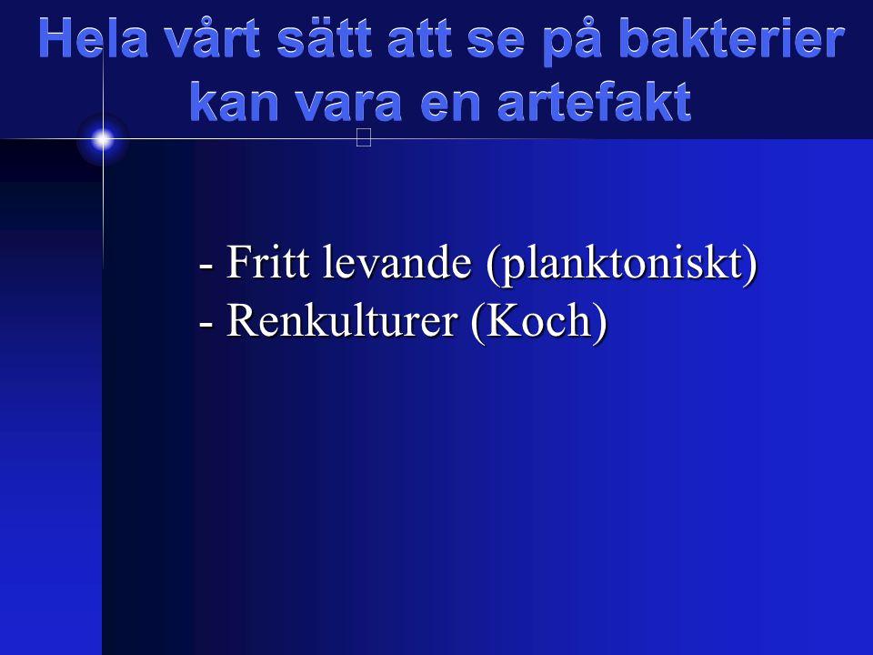 Fyra stadier Initiering Utmognad Underhåll Spridning (planktonisk fas)