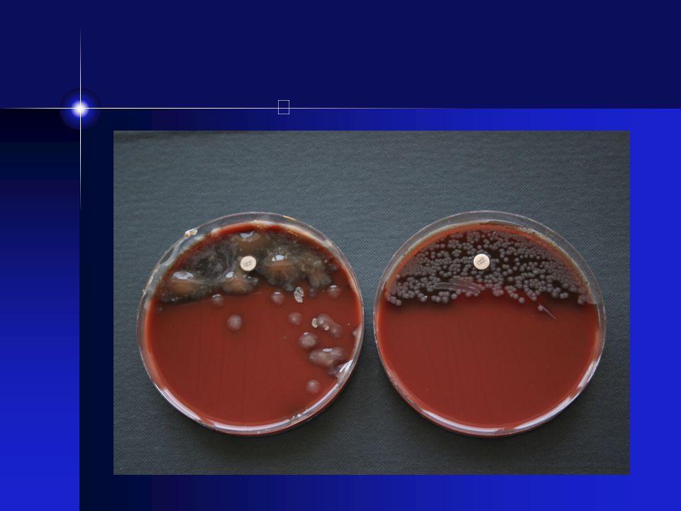 P.aeruginosa -G- stav, miljöbakterie (spridd i sjukhusmiljön) -Ringa näringskrav - kan växa var som helst -Obligat aerob, oxidas +, pigmenterad, söt doft -Kapsel, LPS, ett flertal enzymer som bryter ner vävnader, exotoxin -Naturligt resistent mot ett flertal Ab, utvecklar lätt resistens -Den mest studerade biofilmsbildaren -Icke mukoida - mukoida kolonier