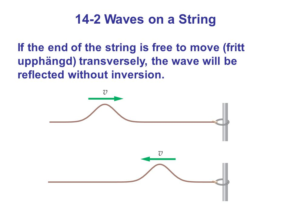 14-2 Waves on a String If the end of the string is free to move (fritt upphängd) transversely, the wave will be reflected without inversion.