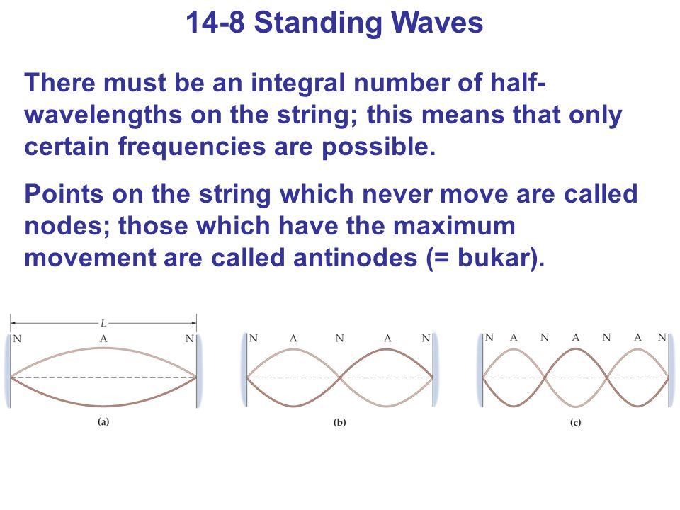 14-8 Standing Waves There must be an integral number of half- wavelengths on the string; this means that only certain frequencies are possible. Points