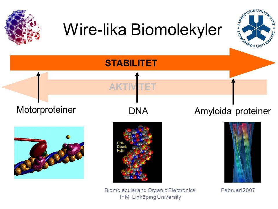 Februari 2007Biomolecular and Organic Electronics IFM, Linköping University Wire-lika Biomolekyler STABILITET AKTIVITET Motorproteiner DNAAmyloida proteiner