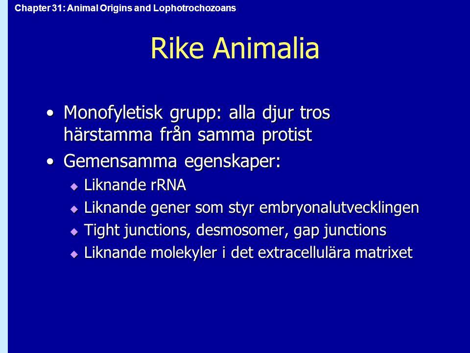 Chapter 31: Animal Origins and Lophotrochozoans Rike Animalia Monofyletisk grupp: alla djur tros härstamma från samma protistMonofyletisk grupp: alla djur tros härstamma från samma protist Gemensamma egenskaper:Gemensamma egenskaper:  Liknande rRNA  Liknande gener som styr embryonalutvecklingen  Tight junctions, desmosomer, gap junctions  Liknande molekyler i det extracellulära matrixet