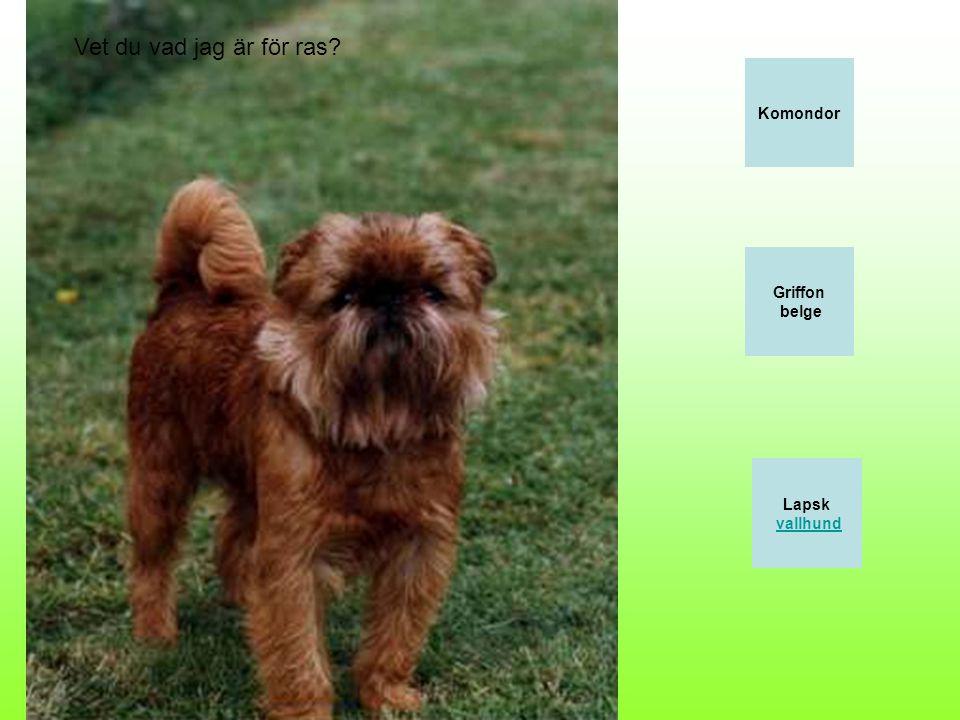 Beauceron Bearded collie Basset hund Vilken hundras är detta