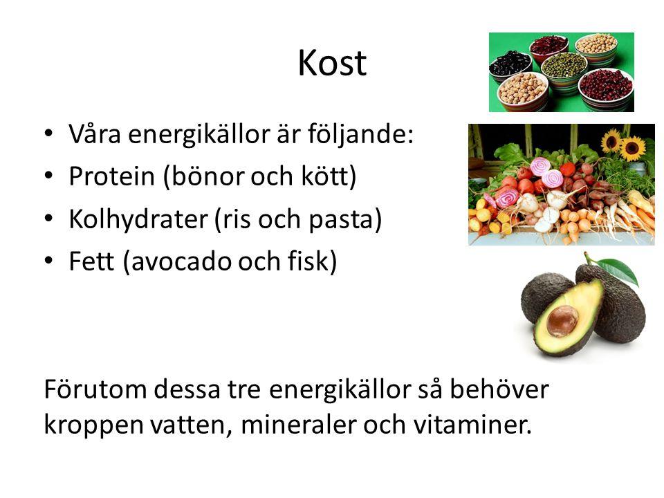 Kost Våra energikällor är följande: Protein (bönor och kött) Kolhydrater (ris och pasta) Fett (avocado och fisk) Förutom dessa tre energikällor så beh