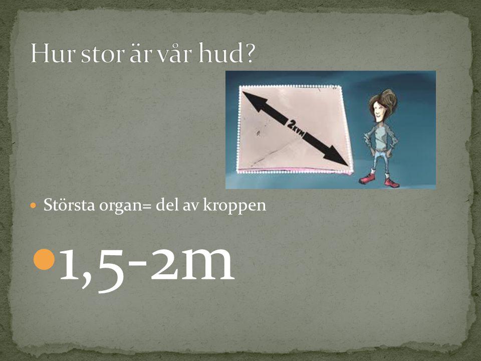 Största organ= del av kroppen 1,5-2m