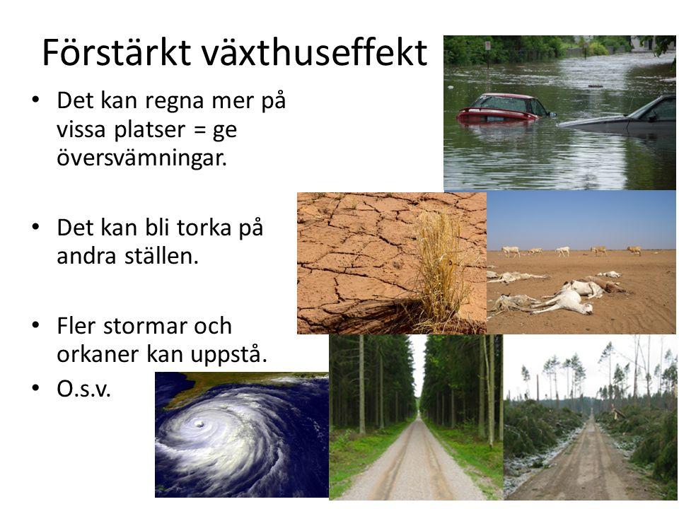 Förstärkt växthuseffekt Det kan regna mer på vissa platser = ge översvämningar. Det kan bli torka på andra ställen. Fler stormar och orkaner kan uppst