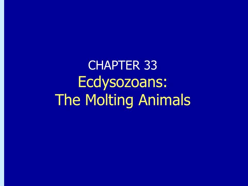 Chapter 32: Ecdysozoans: The Molting Animals Exoskelett: ett viktigt steg i evolutionen + ger skydd och stöd + fäste för muskler  snabbare rörelser -växer inte nytt mjukt skal färdigt då det gamla skalet lossnar nytt mjukt skal färdigt då det gamla skalet lossnar djuret oskyddat och långsamt under skalömsningen djuret oskyddat och långsamt under skalömsningen