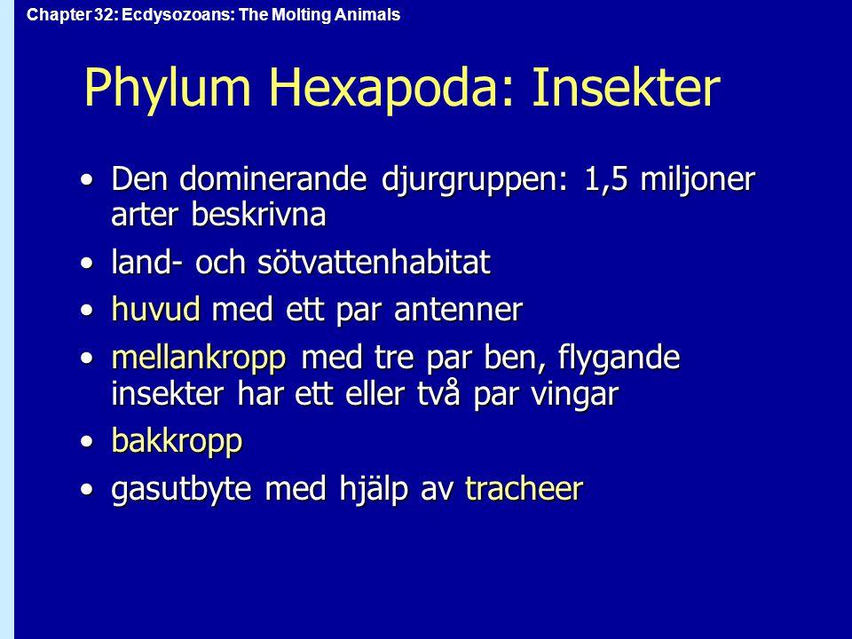 Chapter 32: Ecdysozoans: The Molting Animals Phylum Hexapoda: Insekter Den dominerande djurgruppen: 1,5 miljoner arter beskrivnaDen dominerande djurgr