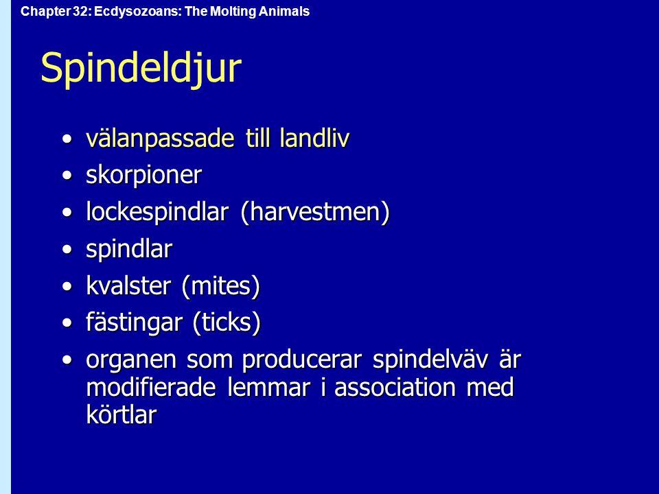 Chapter 32: Ecdysozoans: The Molting Animals Spindeldjur välanpassade till landlivvälanpassade till landliv skorpionerskorpioner lockespindlar (harves