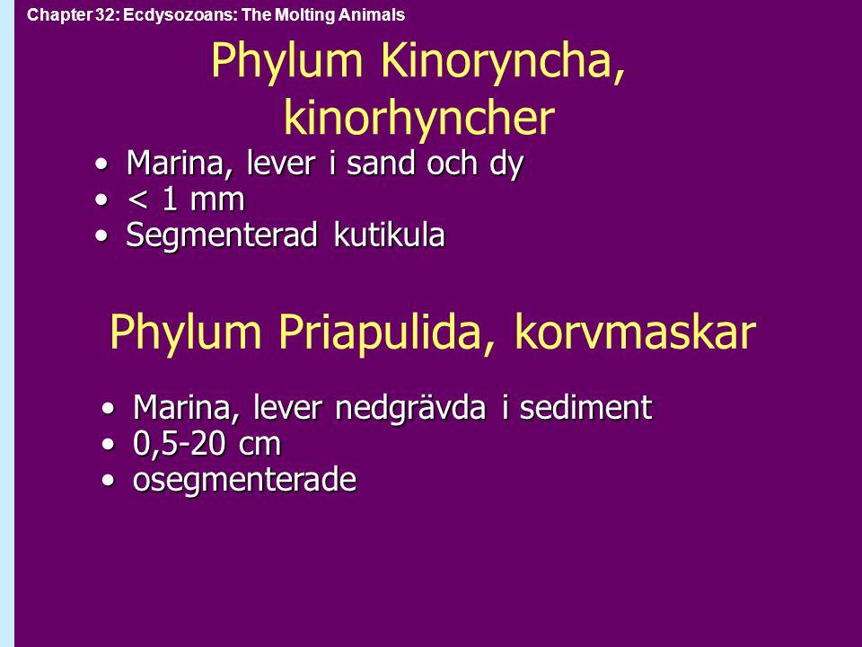 Chapter 32: Ecdysozoans: The Molting Animals Phylum Myriapoda: Mångfotingar Anatomiskt indelade i huvud och kroppAnatomiskt indelade i huvud och kropp kroppen segmenterad, böjlig, med stort antal benkroppen segmenterad, böjlig, med stort antal ben massor med artermassor med arter enkelfotingar (centipedes) är rovdjur med stora käkar, ett par ben per segmentenkelfotingar (centipedes) är rovdjur med stora käkar, ett par ben per segment dubbelfotingar (millipedes) är växtätare, två par ben per segmentdubbelfotingar (millipedes) är växtätare, två par ben per segment