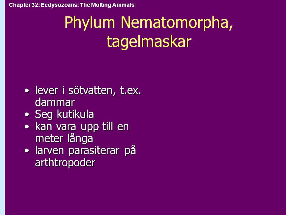 Chapter 32: Ecdysozoans: The Molting Animals Phylum Crustacea: kräftdjur parafyletisk grupp.