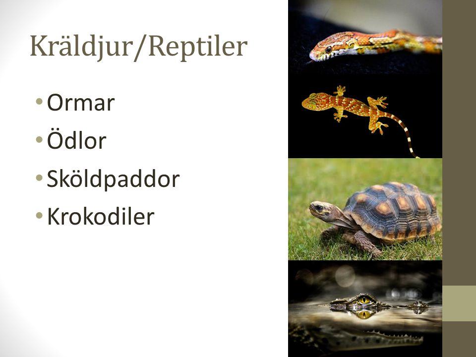 Kräldjur vs.Groddjur Vilka skillnader & likheter kan du se.