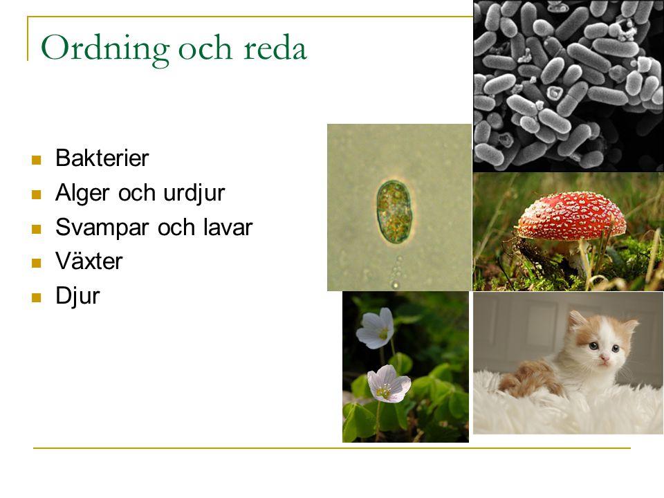 Ordning och reda Bakterier Alger och urdjur Svampar och lavar Växter Djur