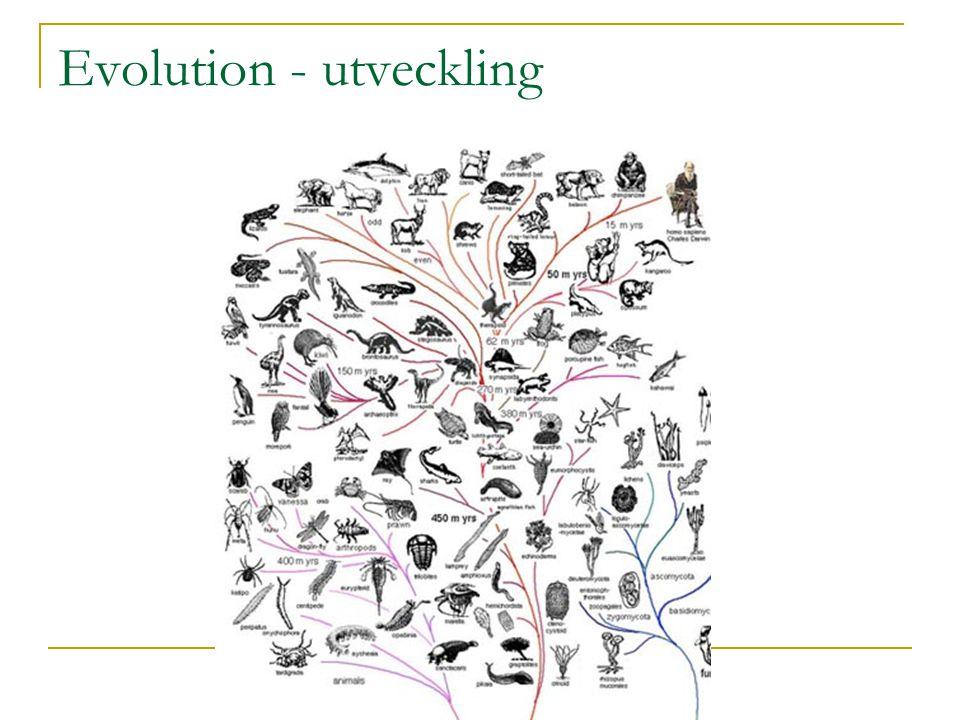 Evolution - utveckling