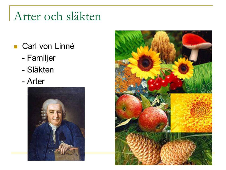 Arter och släkten Carl von Linné - Familjer - Släkten - Arter