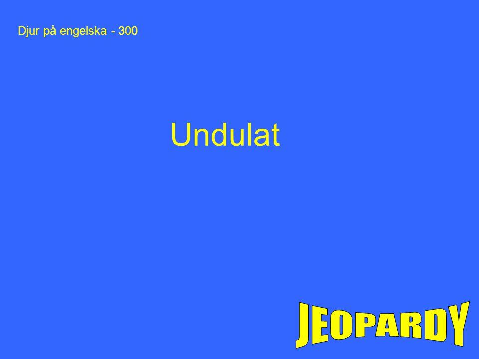 Djur på engelska - 300 Undulat