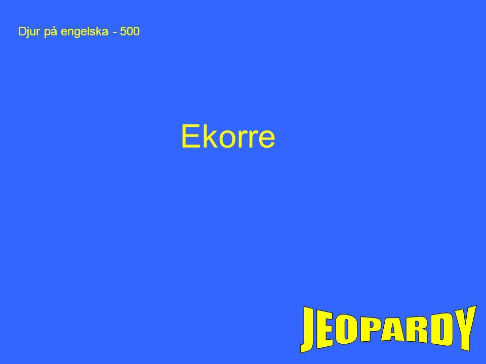 Djur på engelska - 500 Ekorre