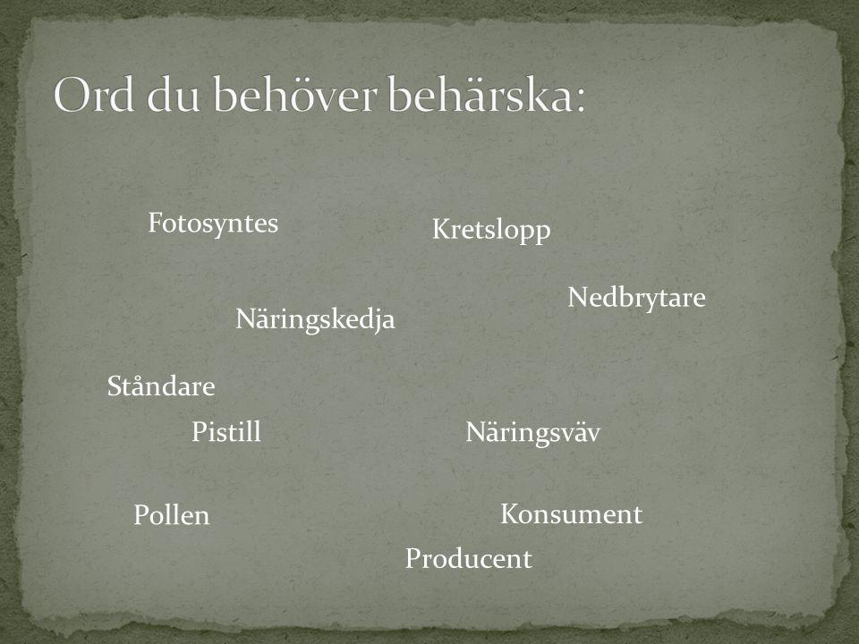 Näringskedja Näringsväv Kretslopp Fotosyntes Nedbrytare Pollen Ståndare Pistill Producent Konsument