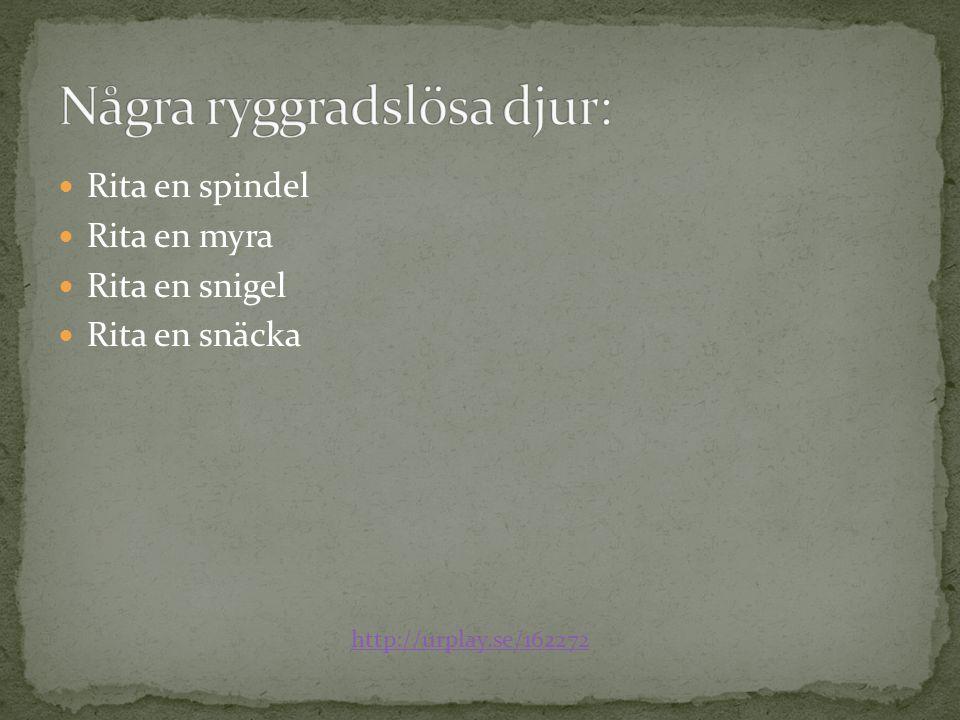Rita en spindel Rita en myra Rita en snigel Rita en snäcka http://urplay.se/162272
