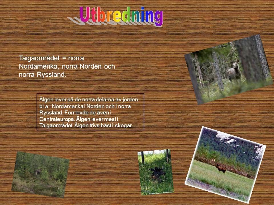 Älgen lever på de norra delarna av jorden bl.a i Nordamerika i Norden och i norra Ryssland. Förr levde de även i Centraleuropa. Älgen lever mest i Tai