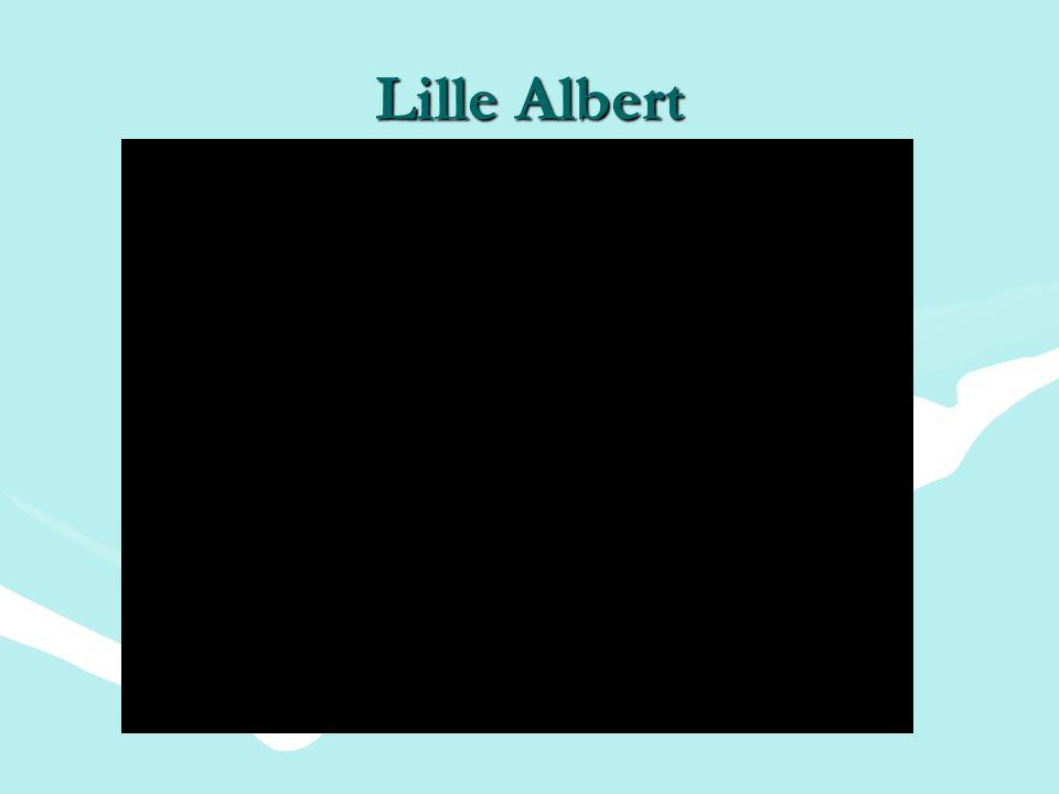 Lille Albert