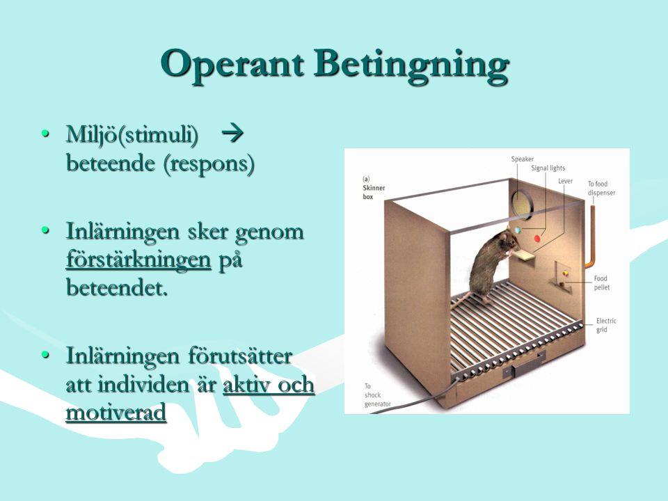 Operant Betingning Miljö(stimuli)  beteende (respons)Miljö(stimuli)  beteende (respons) Inlärningen sker genom förstärkningen på beteendet.Inlärning