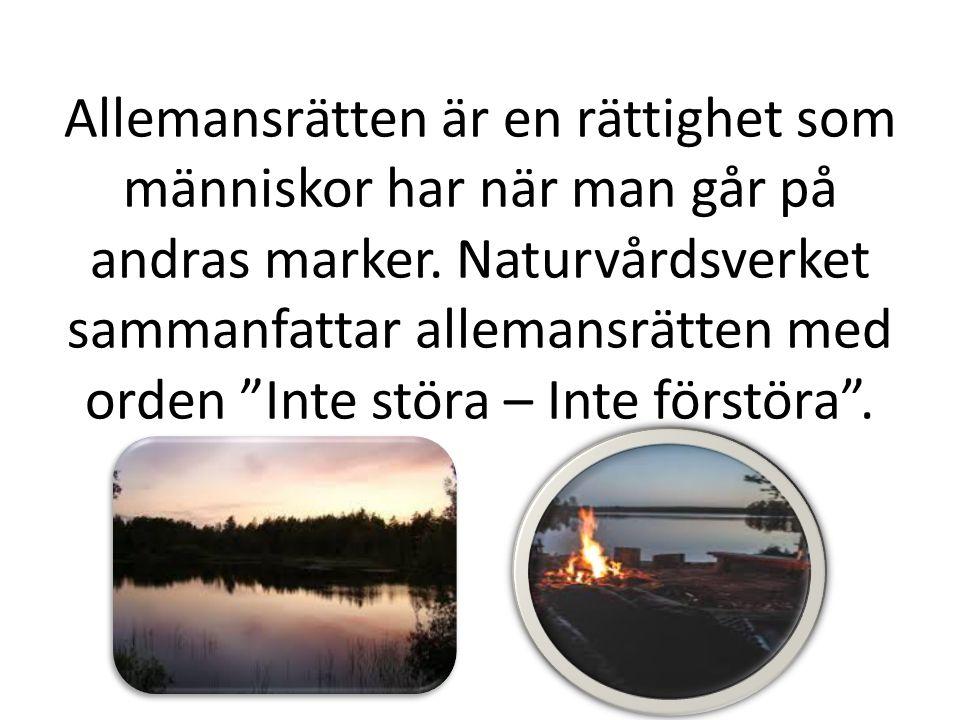 Man får övernatta en natt i någon annans skog men inte förstöra något.