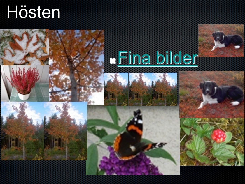 Hösten Fina bilder Fina bilder